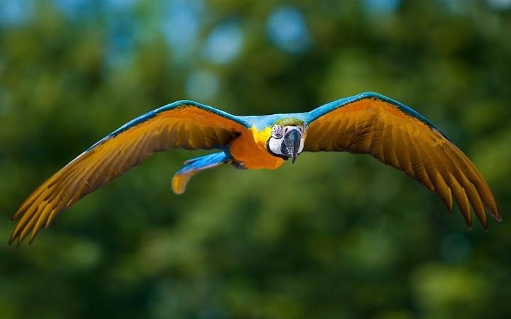 Скачать живым обои на андроид попугай