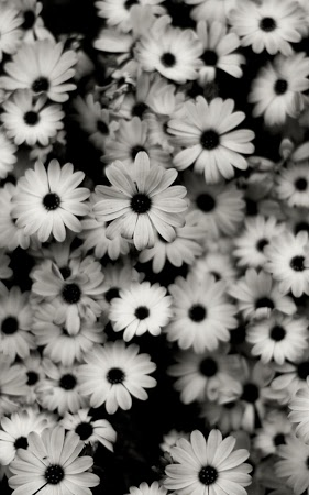 черно белые картинки на заставку для телефона № 53375 бесплатно