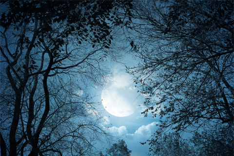Best Moon Wallpaper  Android Informer Is Perfect For Your Phones And