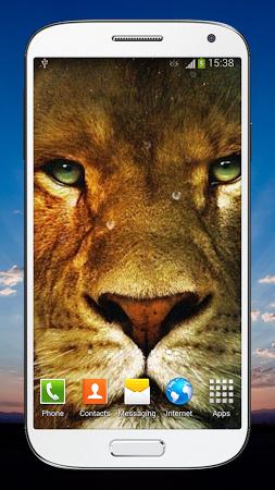 Скачать живых обои на андроид лев