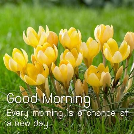 Guten Morgen Blumen Bild Kostenlos Herunterladen